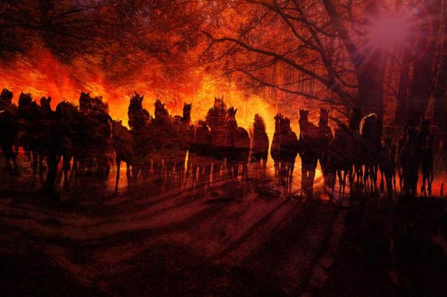 Horde de chevaux fantomatiques dans les bois 01 - photo stock