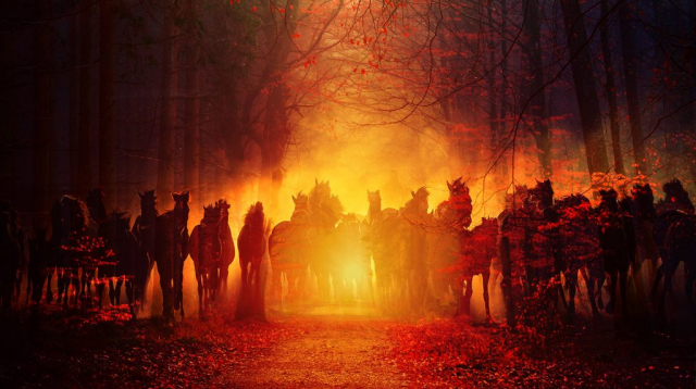 Horde de chevaux fantomatiques dans les bois 02 - photo stock