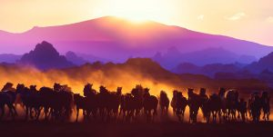 Horde de chevaux sauvages dans la nature 01