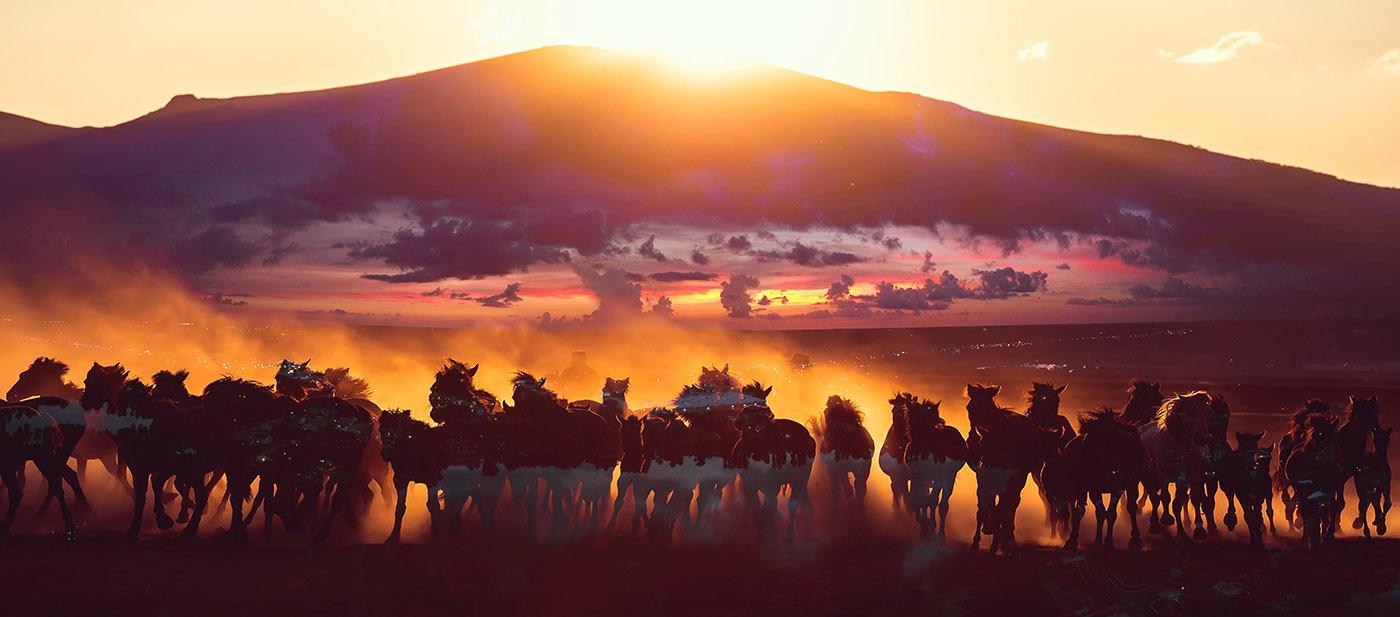 Horde de chevaux sauvages dans la nature 02 - photo stock