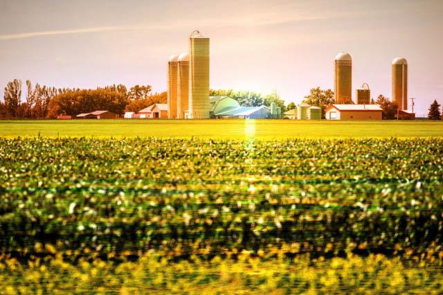 Producteur Agricole - photo stock